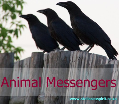 Animal Messengers | www.stellaseaspirit.co.za